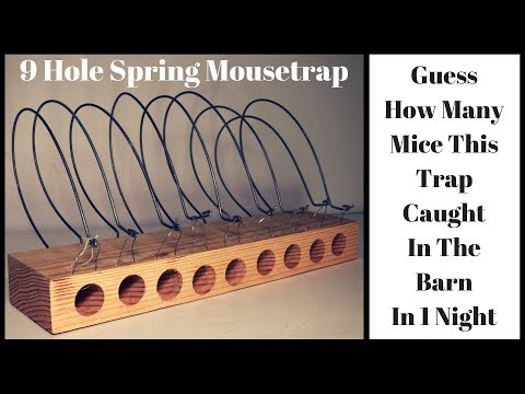Guess How Many Mice This 9 Hole Spring Mousetrap Caught In One Night