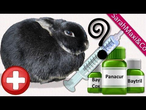 Wird auf die Parasiten in omske geprüft werden