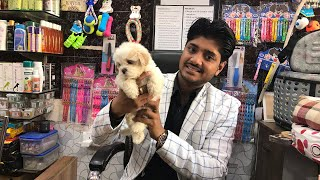 Wonderful Lhasa Apso Puppies Call 7275863266/ 9140752208