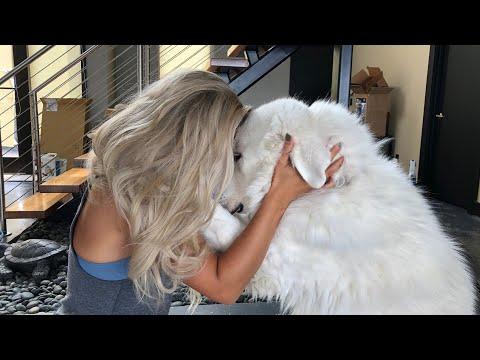 I HUGGED MY DOG FOR TOO LONG