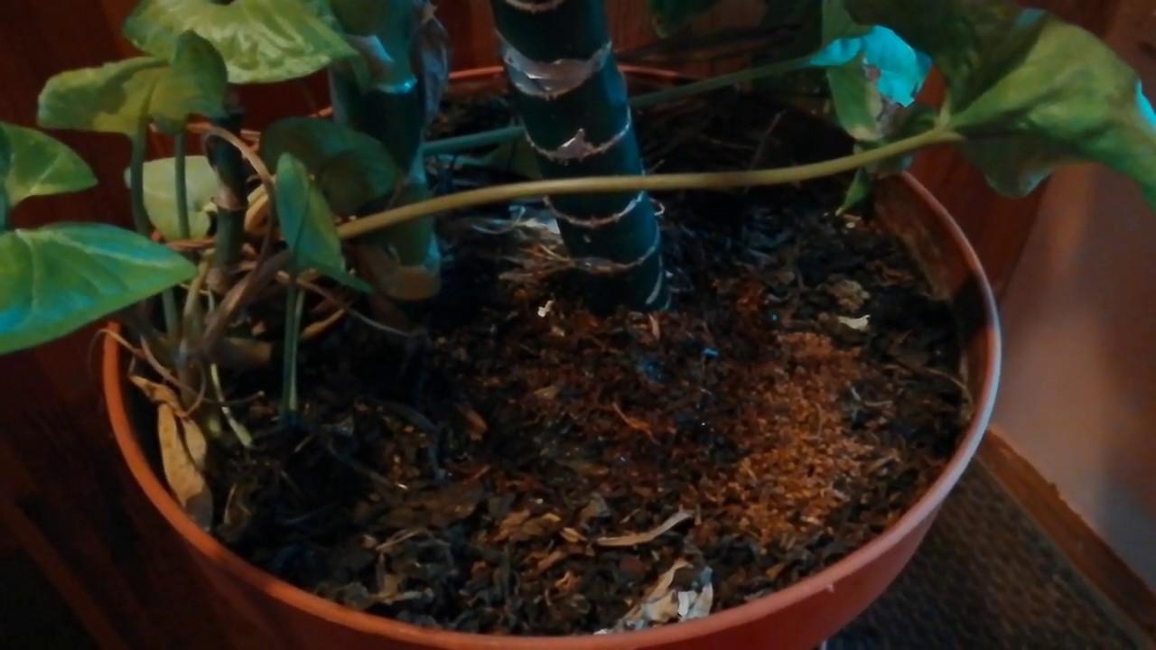 Заварка и кофейная гуща для горшечных растений.