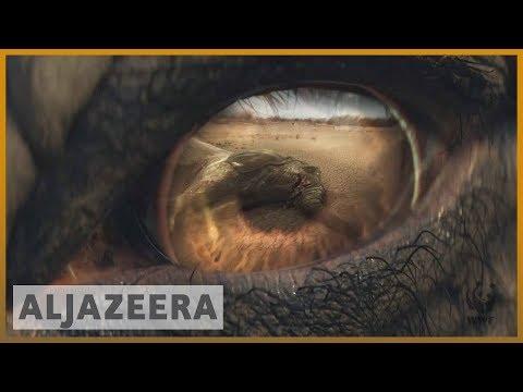 🇬🇧 London summit scrutinises $23bn global wildlife trafficking   Al Jazeera English