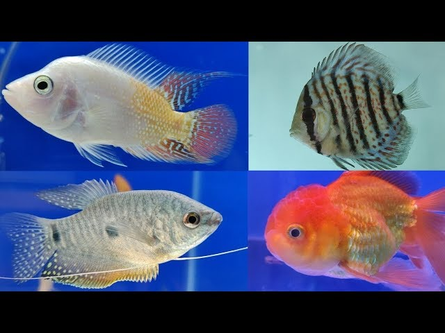 Aqua Jungle Aquarium Fish Store Mumbai