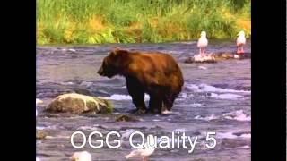 lossy audio compression comparison wma, mp2, mp3, ogg and gsm