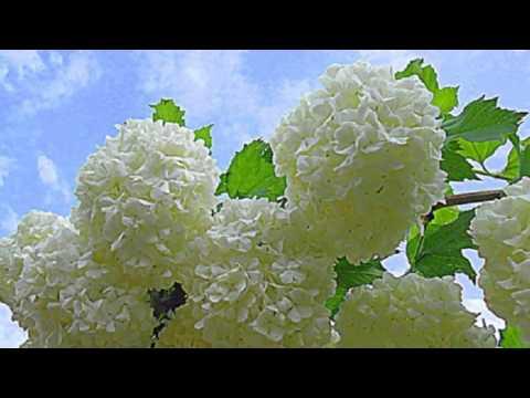 Лучшие декоративные кустарники для сада  Фото+Названия