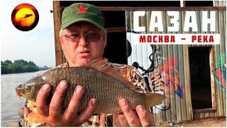 Чем ловить сазана в москва реке