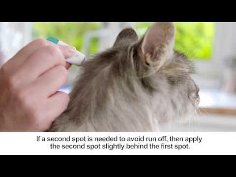 Come analizza a cambiamento di parassiti
