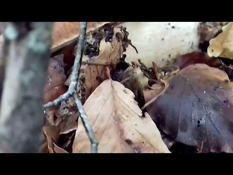 Unguenti o crema da un fungo di unghie