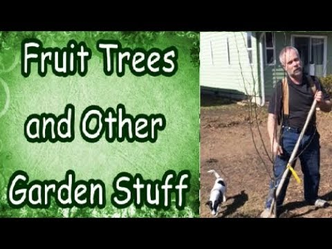 New Fruit Trees and Other Garden Stuff (Small Space Gardening)