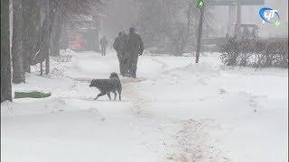 Великий Новгород сегодня переживает самый сильный снегопад с начала зимнего сезона