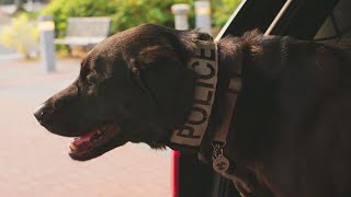 Dog Sniffs Out Electronic Devices to Solve Child Porn Cases