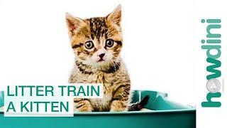 How to Litter Train a Kitten: Litter Training a Cat