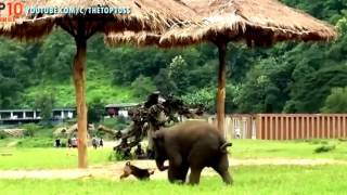 Dog & Cat Funny Videos 2016- Many Kinds Of Synthetic Animal Humor Try Not To Laugh