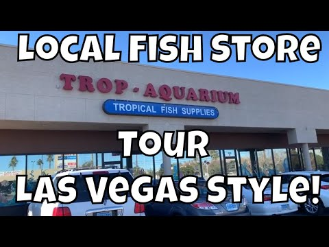 Download LOCAL FISH STORE TOUR TROP AQUARIUM LAS VEGAS Mp4 HD Video and MP3
