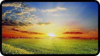 Seelennahrung vs Lichtnahrung – Jenny Solaria
