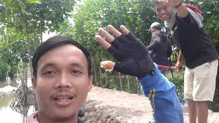 preview picture of video 'Trip tarpon gerakan angler senget medan'
