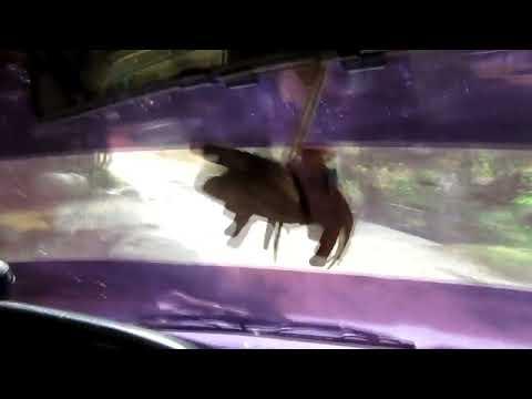 Toyota 22r tuning ( Acelerador de mano)