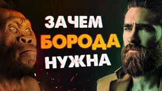 Зачем нужна Борода у мужчин / Половой диморфизм