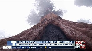 No vote taken by Board of Supervisors on Giant Sequoias
