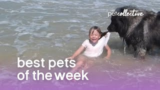Best Pets of the Week (August 2018) Week 3 | The Pet Collective