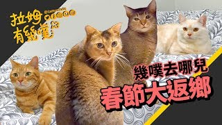 Cat father and son reunion in the new year|LAMUNCATS ♧