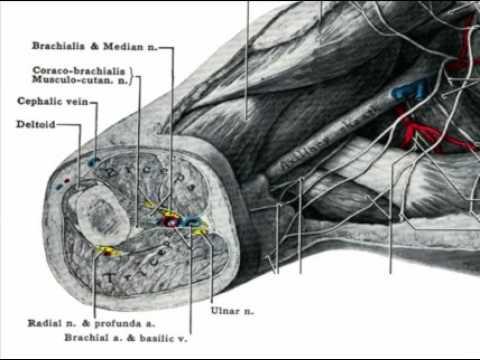 Come potenziare vene su gambe