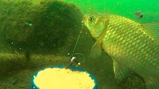 Рыбалка ловля на пробку под водой