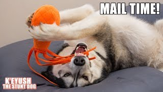 Husky Receives A GoPro Gimbal   Mail Time