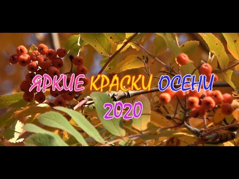 Яркие краски осени 2020