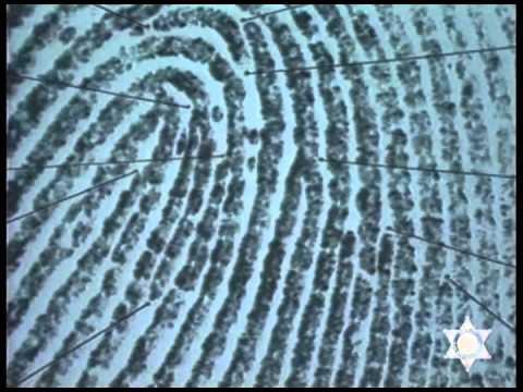 Producing Good Fingerprints, Training, 1987, Color - YouTube