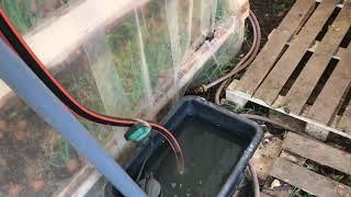 """Как понижать PH воды. Посадили остатки лука спустя 1 месяц. """"Сажаем Вместе"""" - Укроп"""