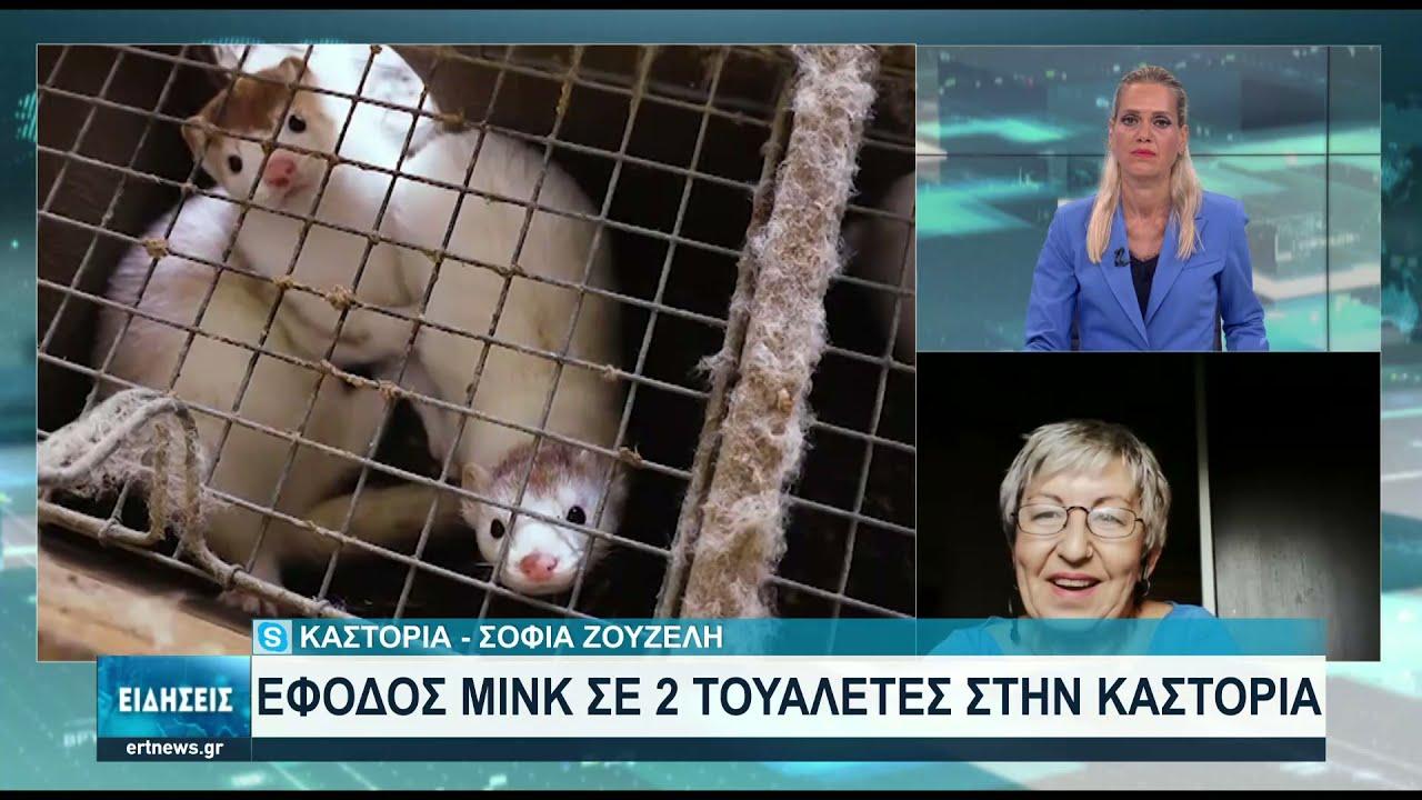 Μινκ εμφανίστηκαν σε τουαλέτες σπιτιών στην Καστοριά | 20/08/2021 | ΕΡΤ