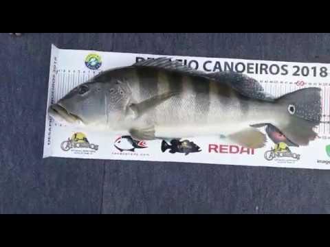 Desafio Canoeiros 2018 - Competidor Carlos Antônio Almeida