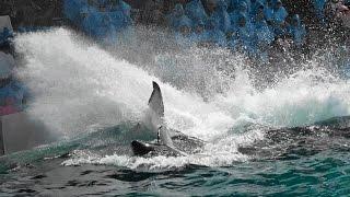 ◆鴨川シーワールド シャチパフォーマンス(2017.05.03)09:00~ ◆
