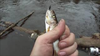 Чем ловить хариуса на маленьких речках