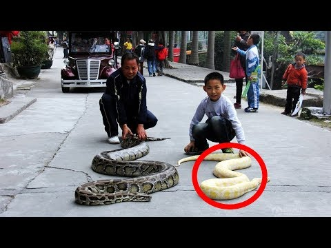 This Little Boy Shares His Bed With A 100 KG Gigantic Python Snake!