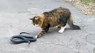 🐱 FEARLESS CATS 🐱 Cats Who Are Totally Badass [Funny Pets]