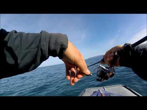 Primavera pescando su una carpa in stagni video