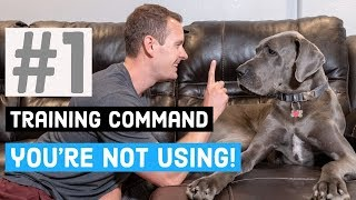 The Most Useful Great Dane Training Command That Youre Not Using! | Great Dane Care