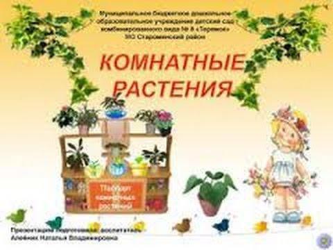 Паспорт комнатных растений