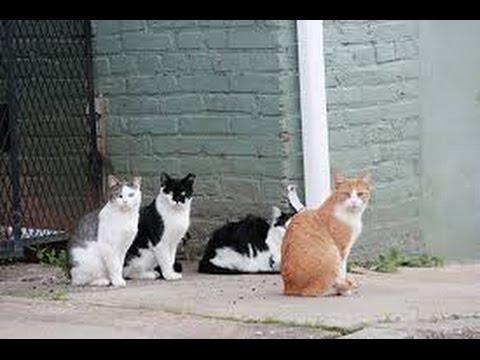 Como Solucionar el problema de Gatos Callejeros- Gatos Ferales - TvAgro por Juan Gonzalo Angel
