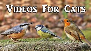 Videos for Cats to Watch : Woodland Birds Extravaganza