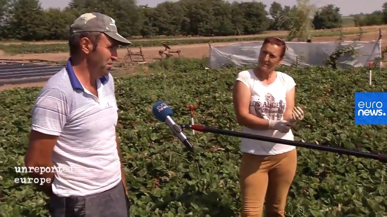Ρουμανία: Πρώην εποχικοί εργάτες στη Δυτική Ευρώπη στήνουν τώρα τις δικές τους επιχειρήσεις