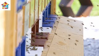 Ambienti TV Show - bee farm / garden