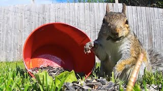 Fantastic Squirrels and Where Cats Find Them - Relaxing Videos For Pets
