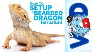 How To Setup a Bearded Dragon Terrarium   Big Al's