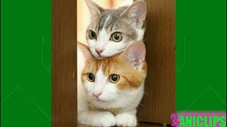 Funny Cats Compilation 2018 - Best Cat Videos of The Year 2018