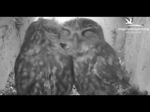 In Nest Box Together - 19.03.17