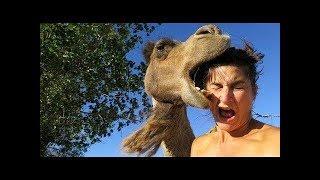 Смешные нападения животных на людей   Funny animal attacks on humans