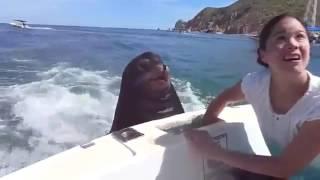 Морской лев просит рыбу у людей в лодке